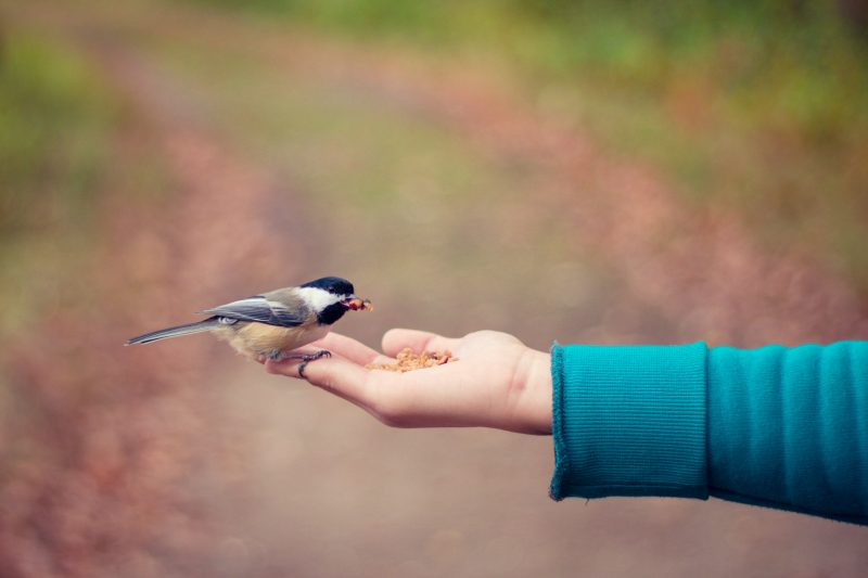 feeding a bird out of hand | marketing success