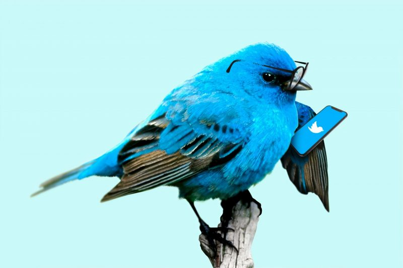 bluebird checking Twitter | Twitter is still relevant